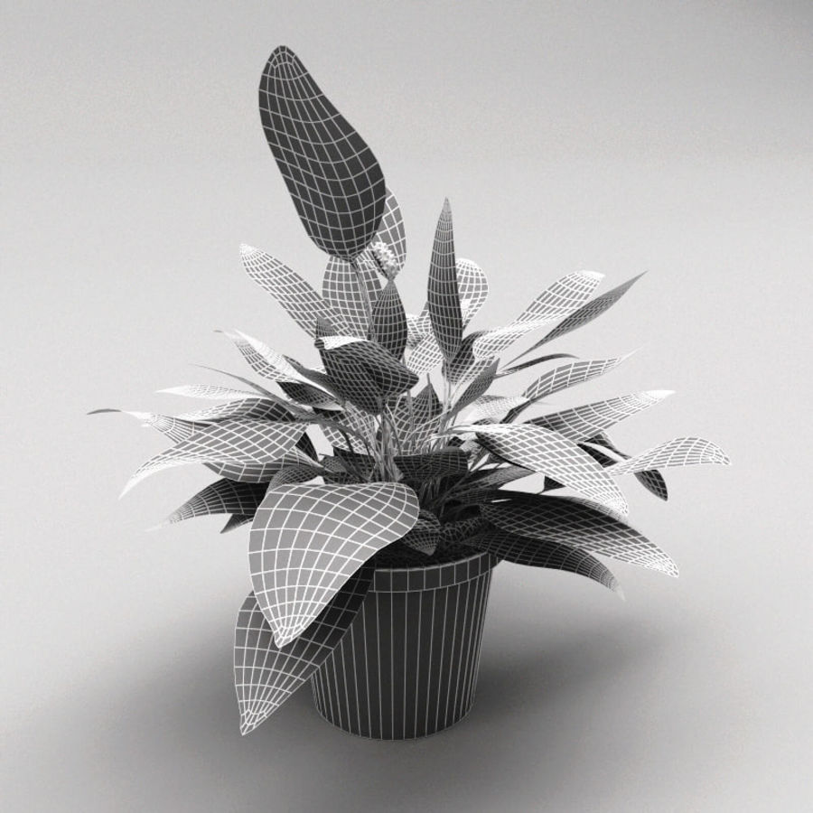 Spathiphyllum Petite royalty-free 3d model - Preview no. 11