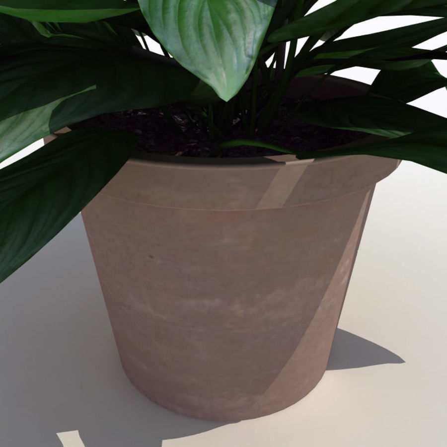 Spathiphyllum Petite royalty-free 3d model - Preview no. 10