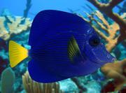 Fish_06 3d model