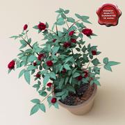 Роза Джуди Фишер V2 3d model