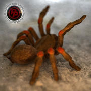Spider / Tarantula 3d model