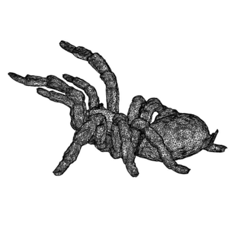Pająk / Tarantula royalty-free 3d model - Preview no. 14