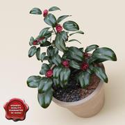 Camellia japonica 3d model