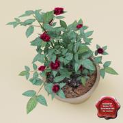 Роза Джуди Фишер 3d model