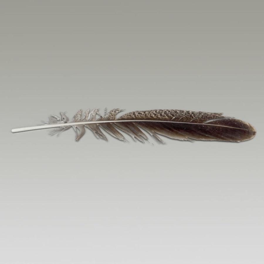 Piuma d'uccello V1 royalty-free 3d model - Preview no. 3