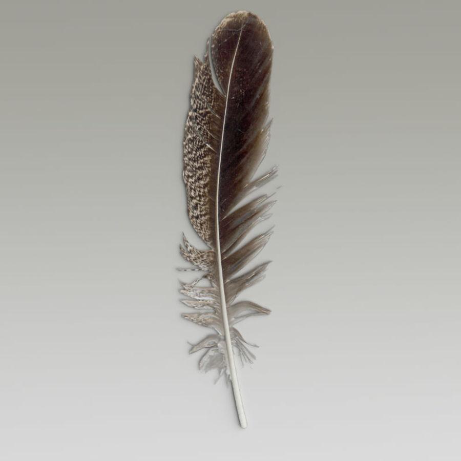 Piuma d'uccello V1 royalty-free 3d model - Preview no. 4
