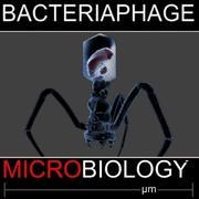 bacteriaphage 3d model
