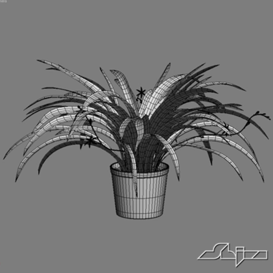 Chlorophytum Plant in Pot royalty-free 3d model - Preview no. 4