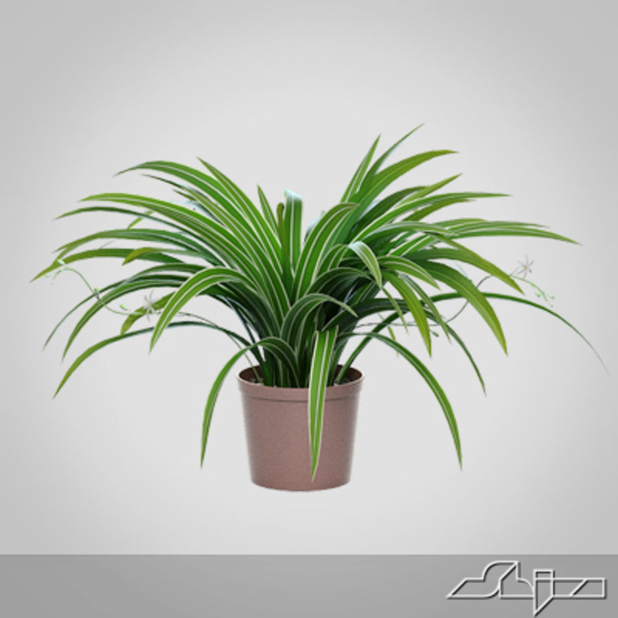 Chlorophytum Plant en Pot royalty-free 3d model - Preview no. 6