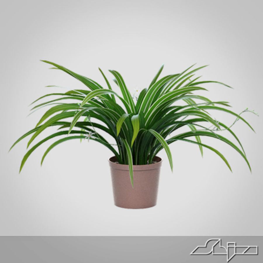 Chlorophytum Plant in Pot royalty-free 3d model - Preview no. 2