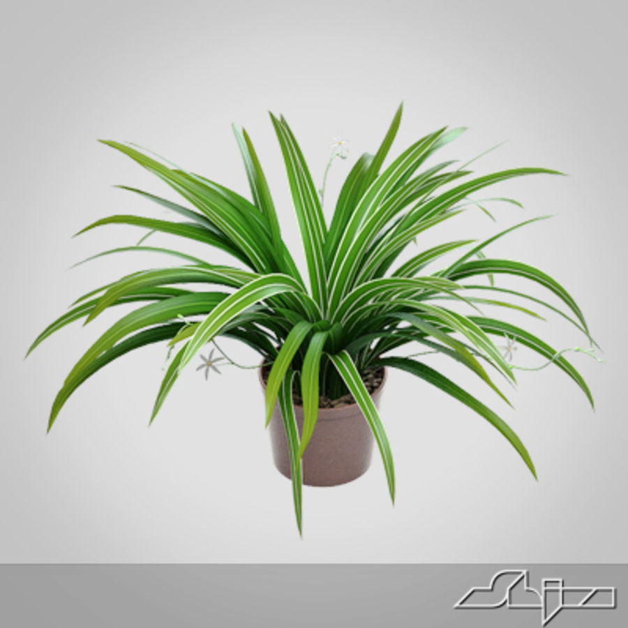 Chlorophytum Plant in Pot royalty-free 3d model - Preview no. 1