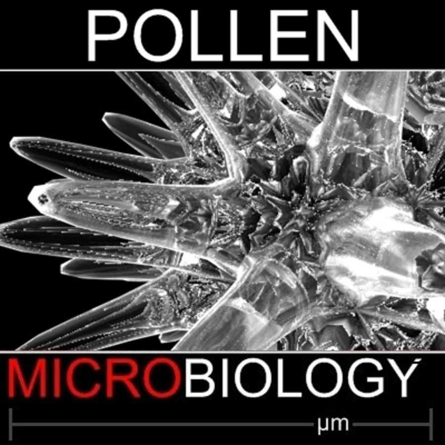 Pollen Spore royalty-free 3d model - Preview no. 1