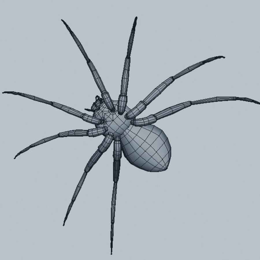 Spider royalty-free 3d model - Preview no. 11
