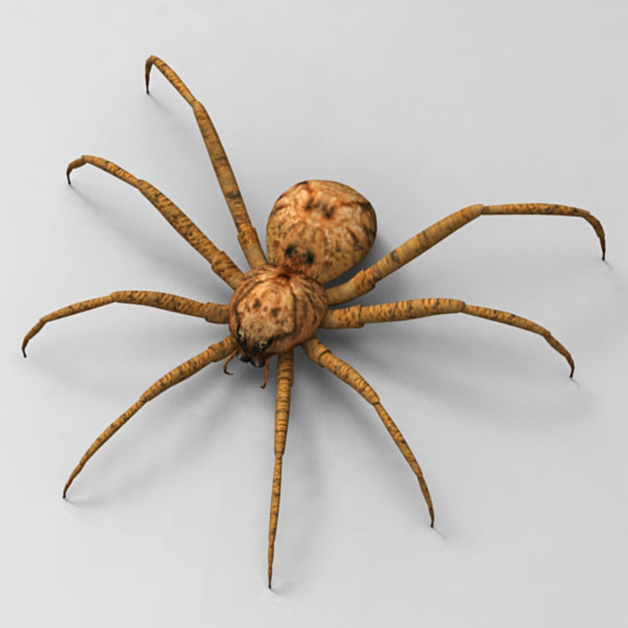 Spider royalty-free 3d model - Preview no. 7
