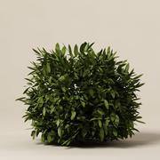 Bush_21 3d model