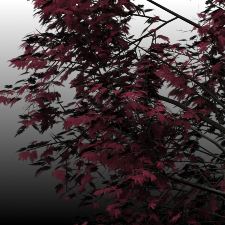Red Maple royalty-free 3d model - Preview no. 2