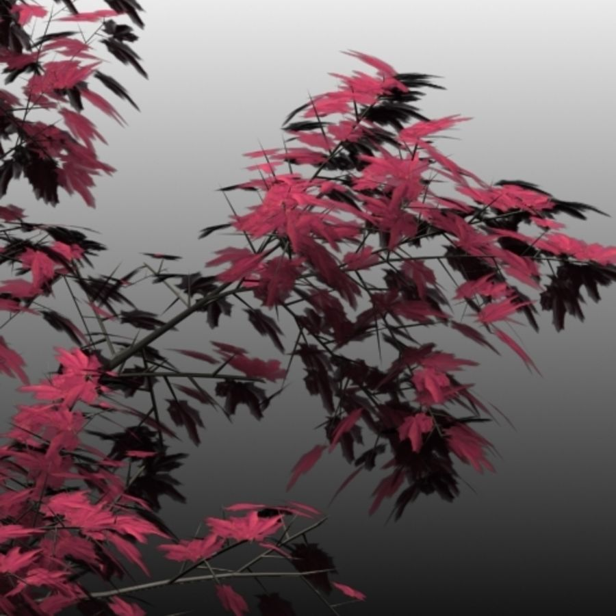 Red Maple royalty-free 3d model - Preview no. 3