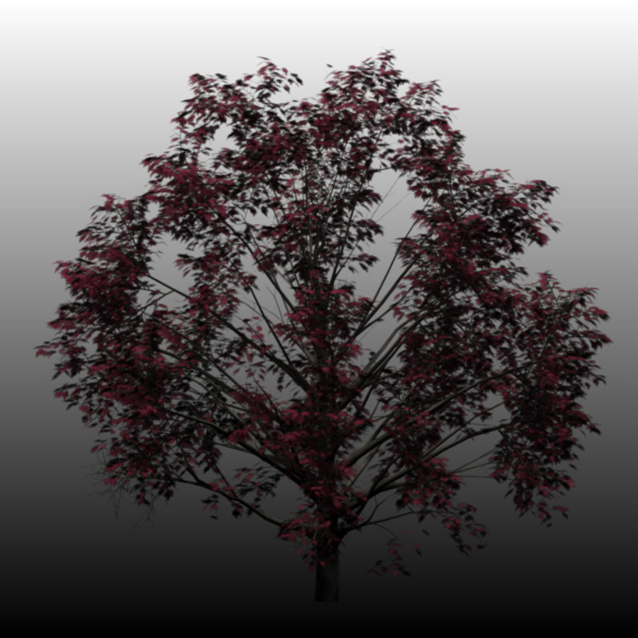 Red Maple royalty-free 3d model - Preview no. 5