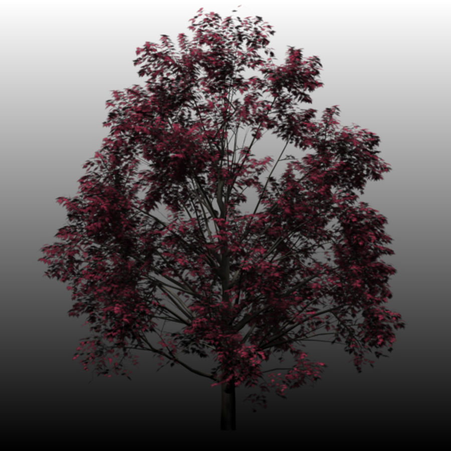 Red Maple royalty-free 3d model - Preview no. 4