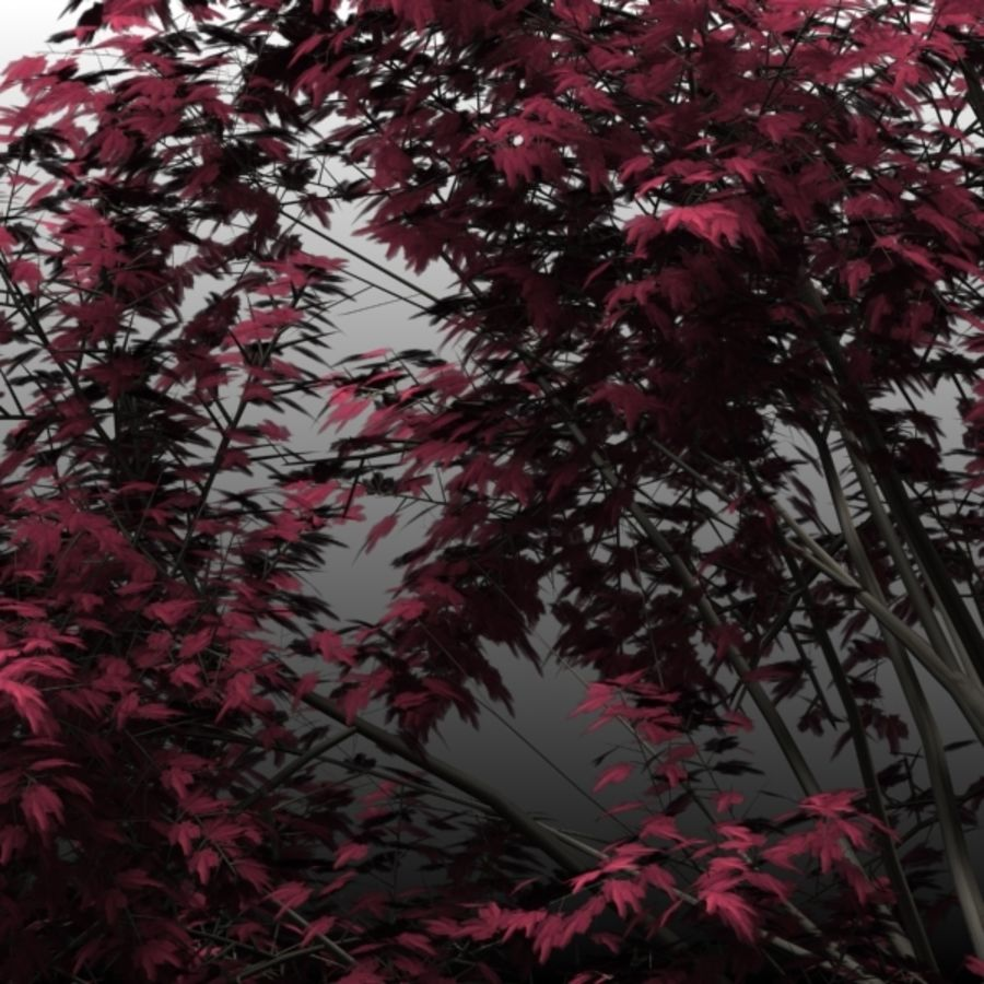 Red Maple royalty-free 3d model - Preview no. 1