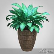 植物在花瓶 -  Aglaonema 3d model