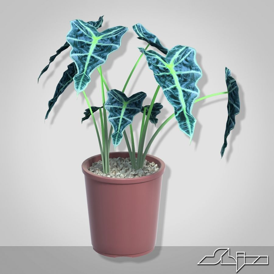 Alocasia-Pflanze im Topf royalty-free 3d model - Preview no. 1