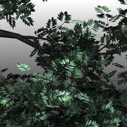 느릅 나무 3d model