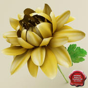 Chrysanthemum 3d model