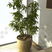Bamboo.c4d 3d model