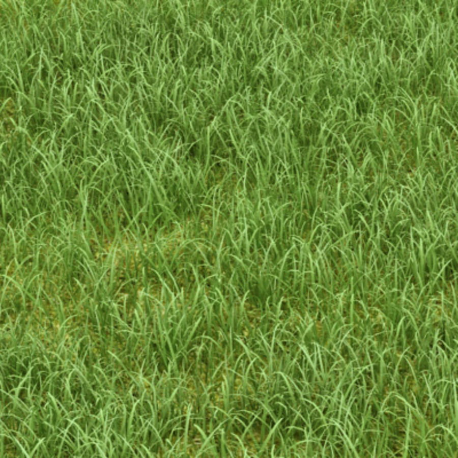 Photorealistic Vray Proxy Grass 3d Model 15 Max Free3d