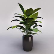Plant_pot_01 3d model