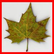 Fallen Leaf II 3d model