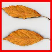 Fallen Leaf I(1) 3d model