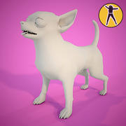 Chihuahua in grey 3d model