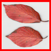 Fallen Leaf III 3d model