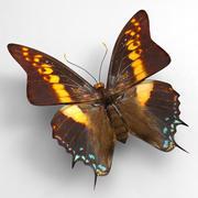 Butterfly 8 3d model