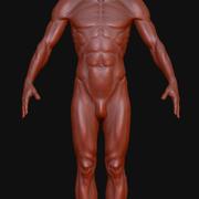 Man.ZTL 3d model