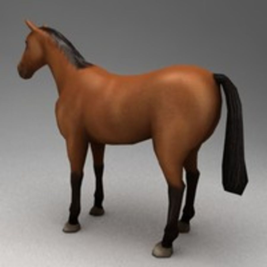 Horse rigged royalty-free 3d model - Preview no. 3