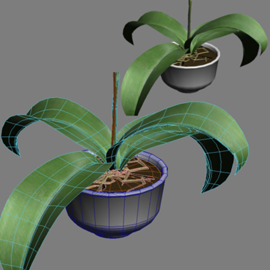 Blume Orchidee Pflanze royalty-free 3d model - Preview no. 11