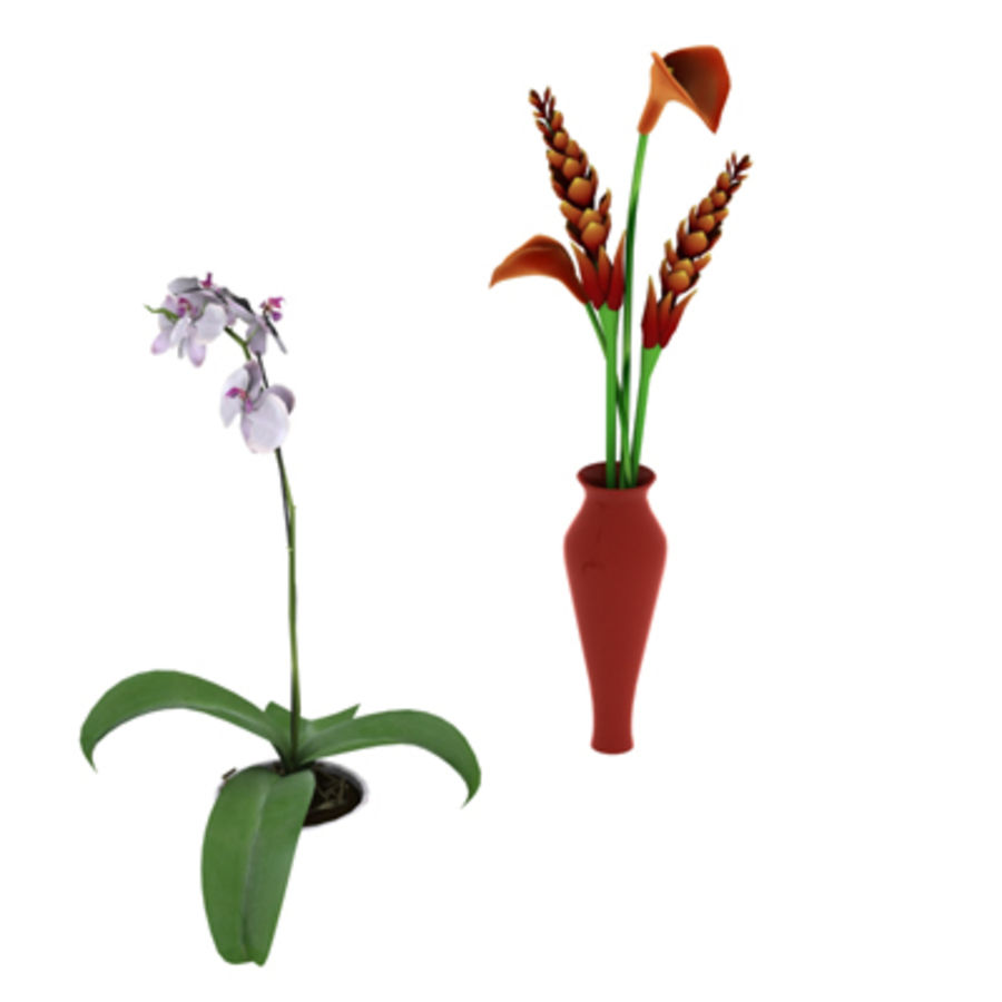 Blume Orchidee Pflanze royalty-free 3d model - Preview no. 9