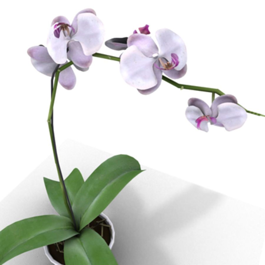 Blume Orchidee Pflanze royalty-free 3d model - Preview no. 3