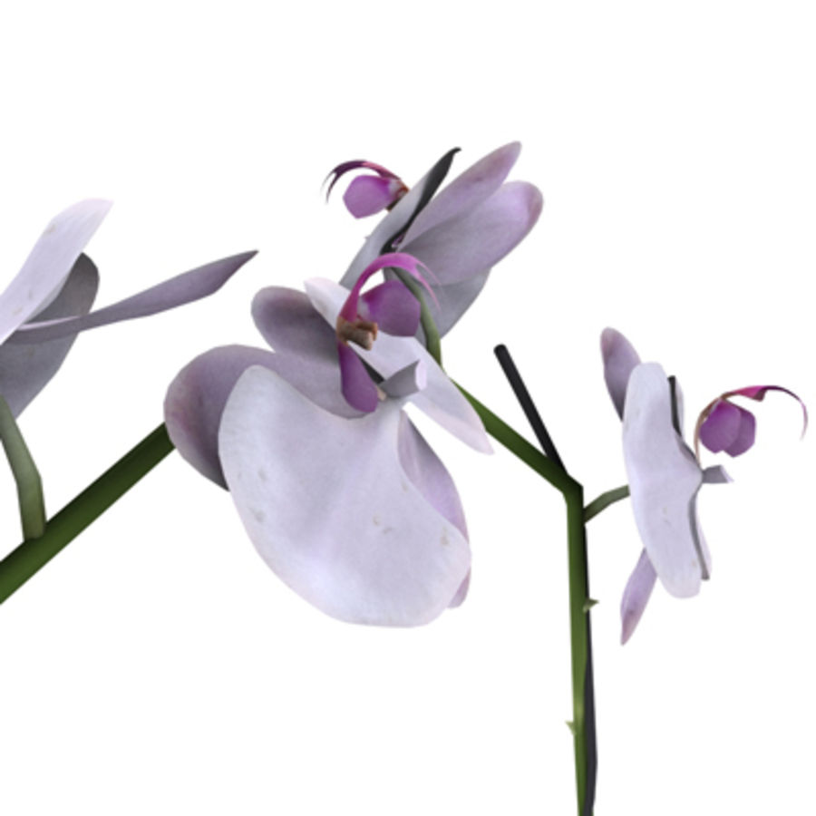Blume Orchidee Pflanze royalty-free 3d model - Preview no. 5