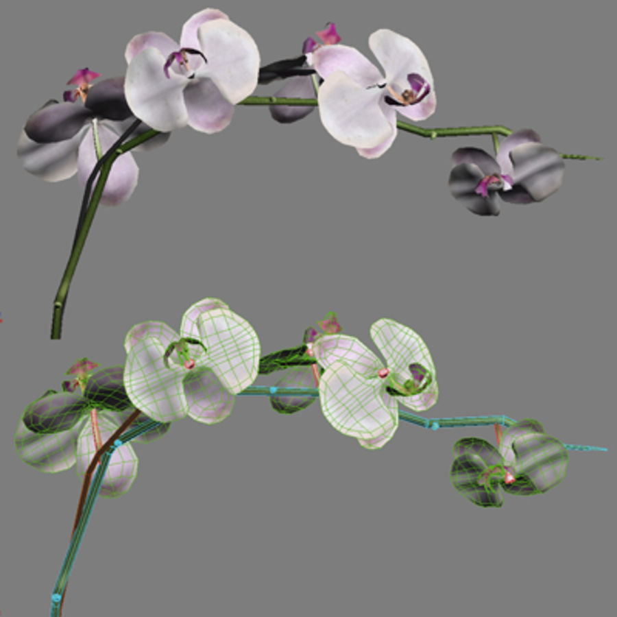 Blume Orchidee Pflanze royalty-free 3d model - Preview no. 12