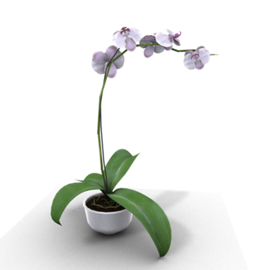 Blume Orchidee Pflanze royalty-free 3d model - Preview no. 2