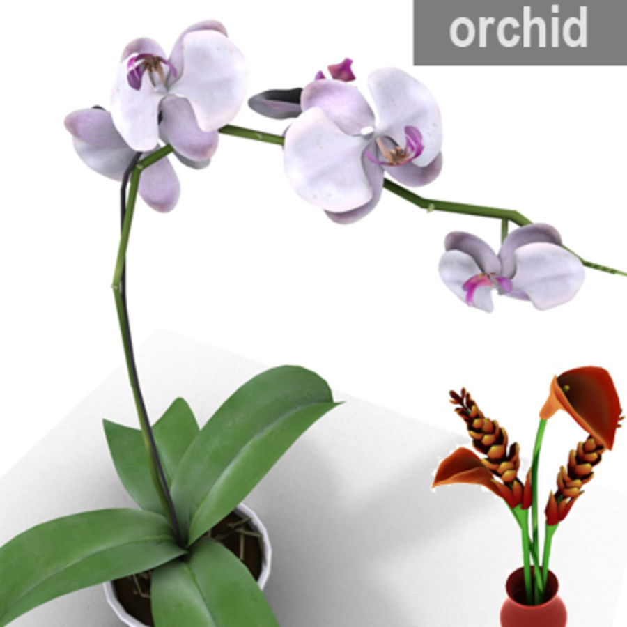 Blume Orchidee Pflanze royalty-free 3d model - Preview no. 1
