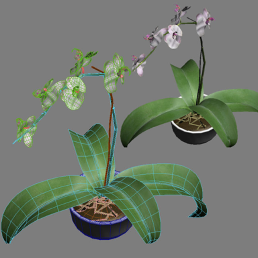 Blume Orchidee Pflanze royalty-free 3d model - Preview no. 10
