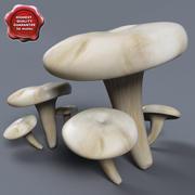 Sammlung Pleurotus ostreatus 3d model