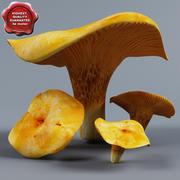 Cantharellus cibarius 3d model