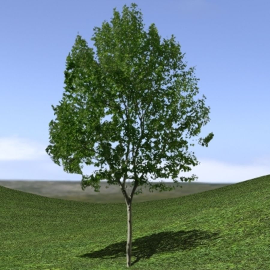 Forest lined grassy terrain royalty-free 3d model - Preview no. 16