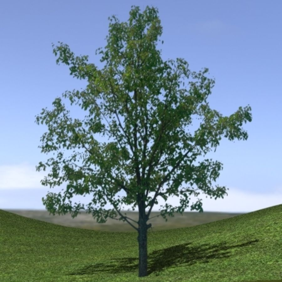 Forest lined grassy terrain royalty-free 3d model - Preview no. 17